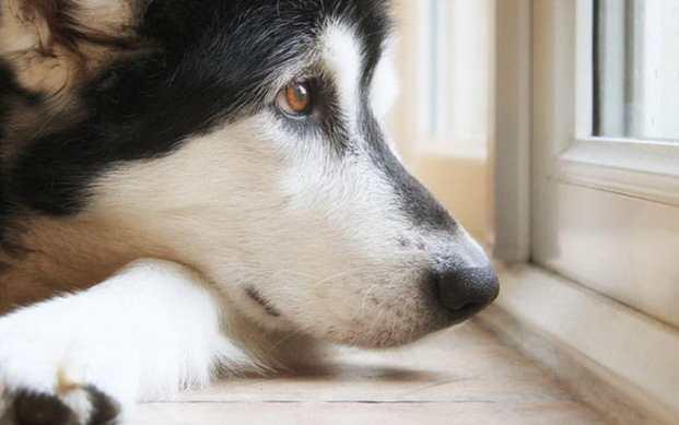 dog-pacing.jpg
