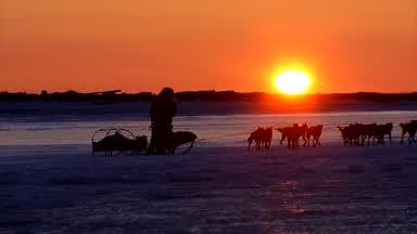iditarod-46-pre-race-feature.jpg